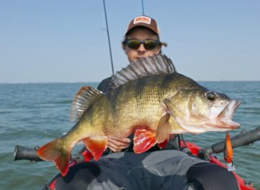 Big-Perch-hardbait