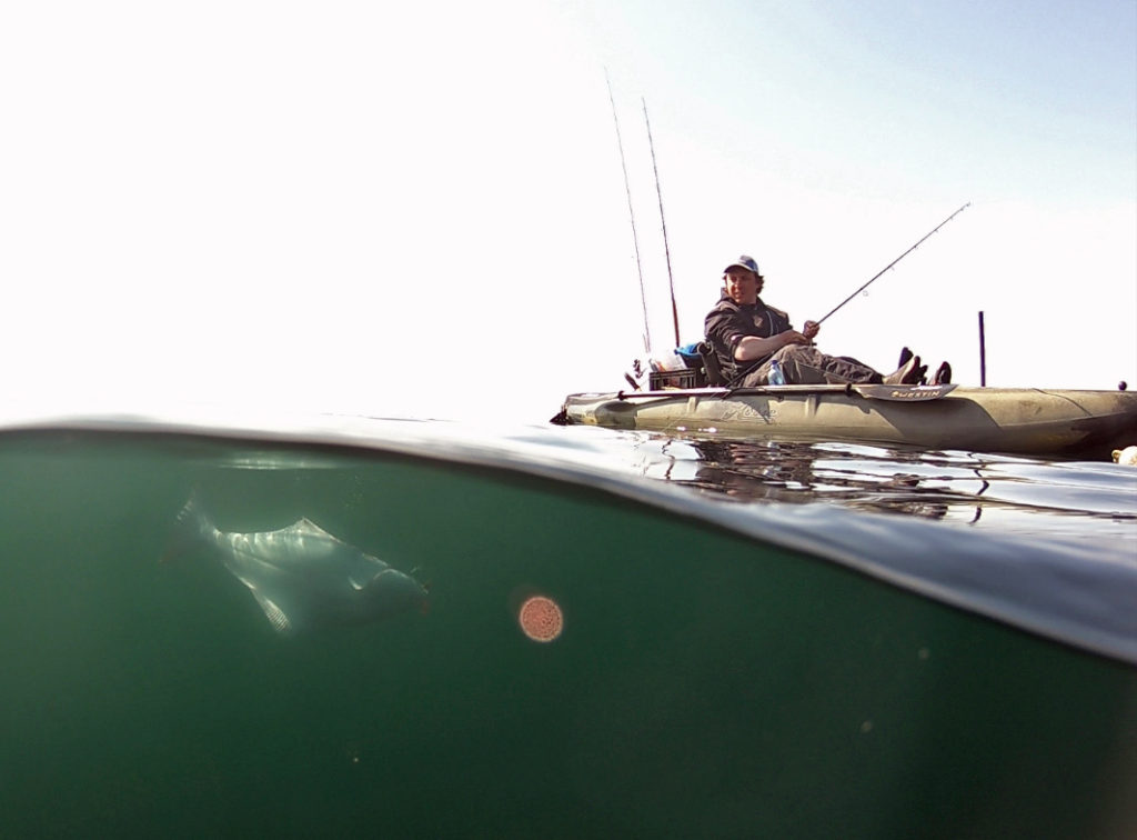 Halibut-gopro-dome