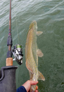 Pike-release-kayak